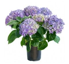 Садовые растения, цветы